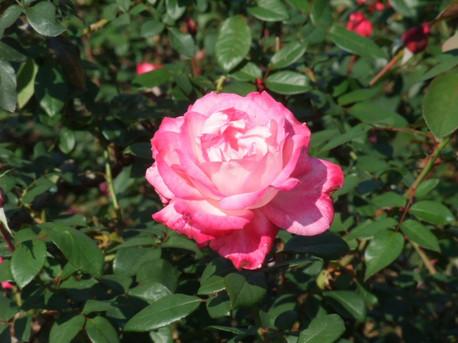 14jindai_botanical_park_10