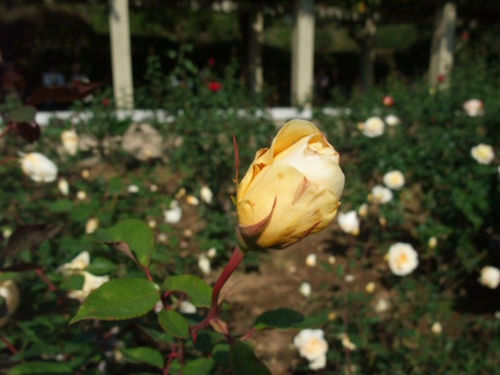 14jindai_botanical_park_13