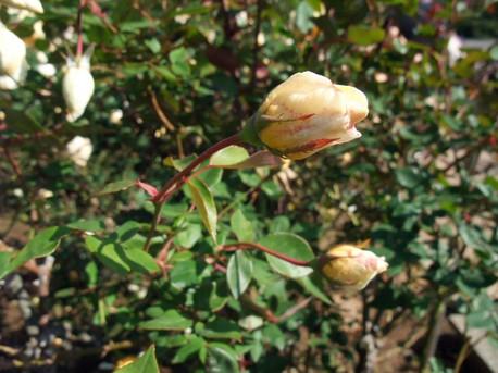 14jindai_botanical_park_14