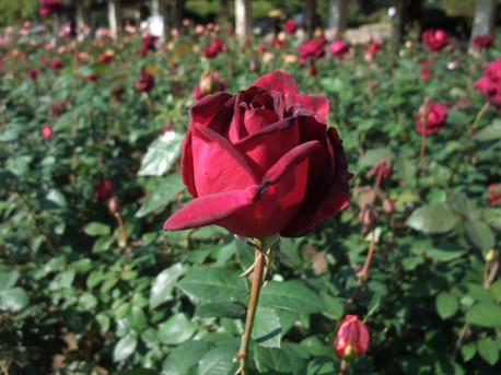14jindai_botanical_park_15
