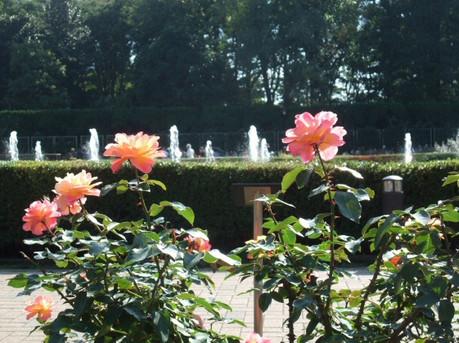 14jindai_botanical_park_16