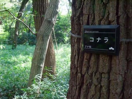 14jindai_botanical_park_20