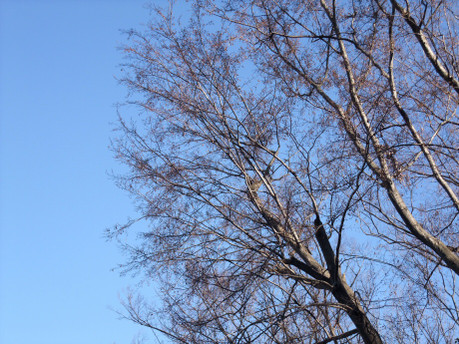 15winter_tree