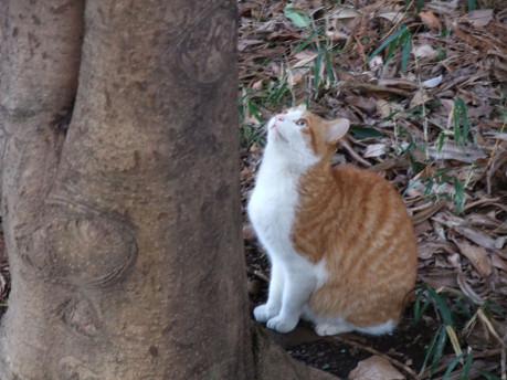 16orange_cat