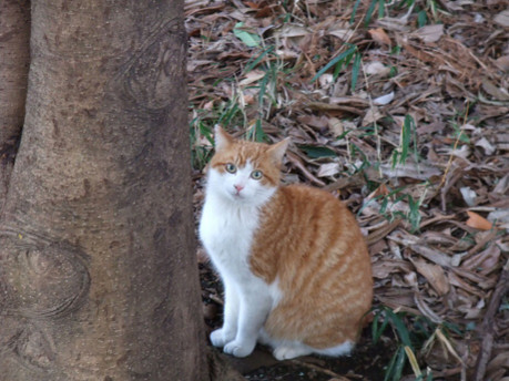 16orange_cat_01