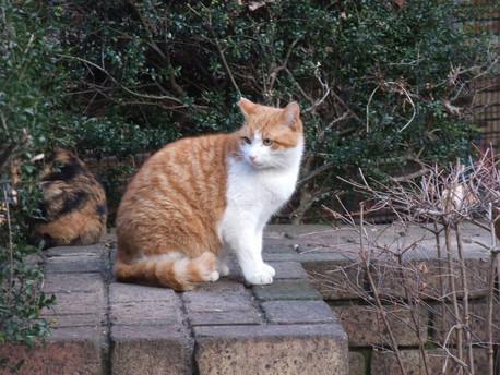 16orange_cat_02