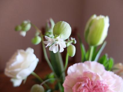 17february_flowers_04