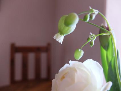 17february_flowers_05