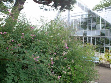 17herb_botanical_garden_01
