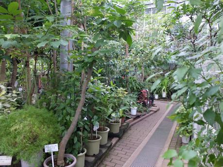 17herb_botanical_garden_03