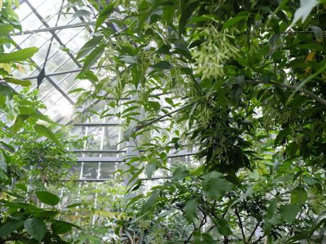 17herb_botanical_garden_04