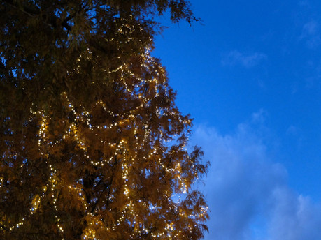 17xmas_tree