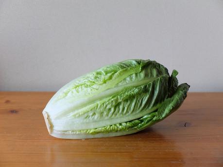 18romaine_lettuce
