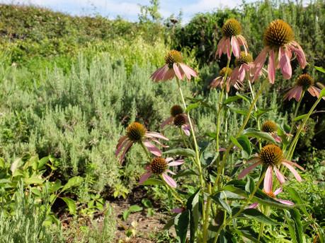 18medical_herb_garden12