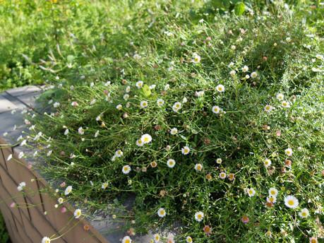 18medical_herb_garden03