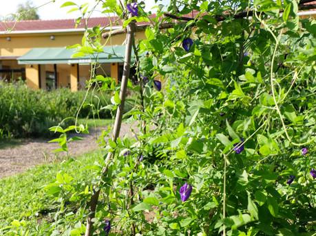 18medical_herb_garden10