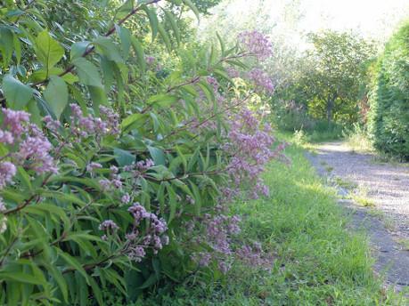18medical_herb_garden11