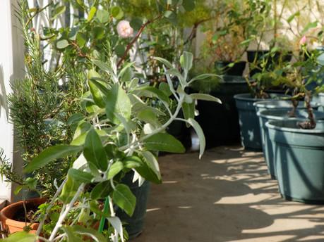 18morning_garden