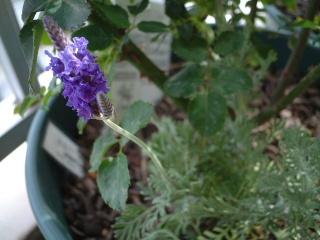 Conpanionplants