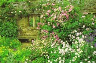 English_garden_025_3