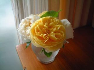 English_rose_02