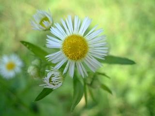 flowers_006