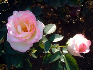 flowers_033_2