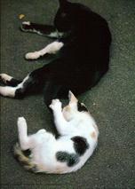 My_dear_cats_01_1
