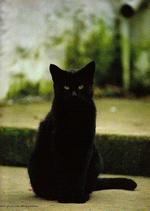 My_dear_cats_03