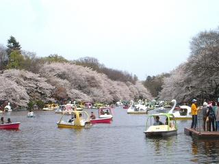Ohanamibiyori