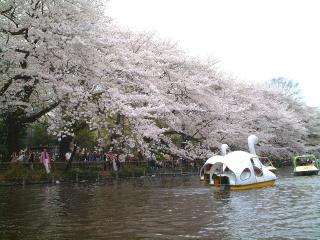 Ohanamibiyori_04