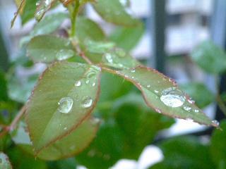 Raindrop_01