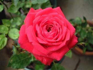Red_monterosa_forever01jpg