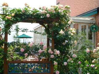 Rose_cafe_02