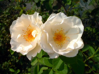 Rose_cafe_02_2