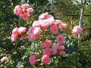 Rose_cafe_06_2