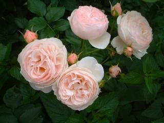 Rose_cafe_09