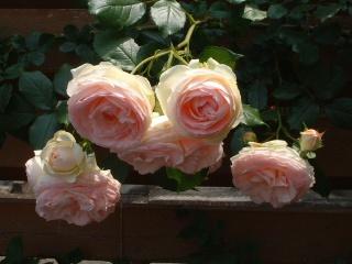 Rose_cafe_19