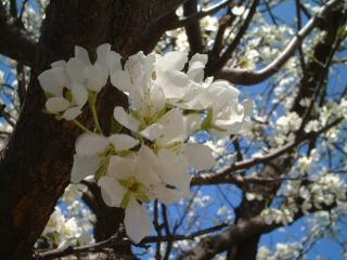 Sakura_05_1