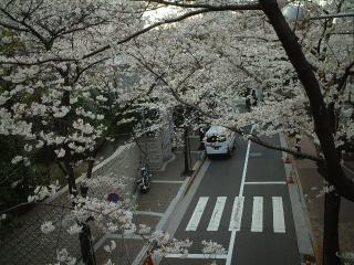 Sakurazaka_04_1