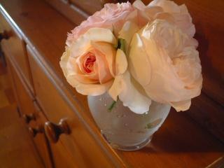 Todays_rose