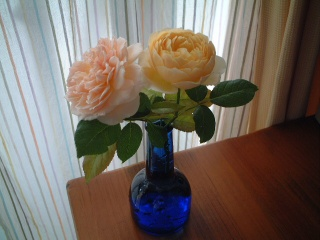 Todays_roses