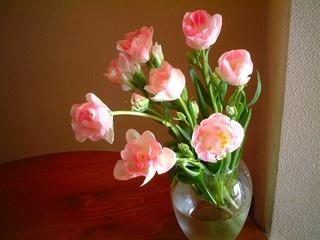tulip_02