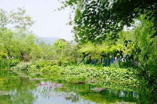 Water_garden_2