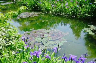 Water_garden_3