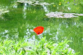 Water_garden_4_1