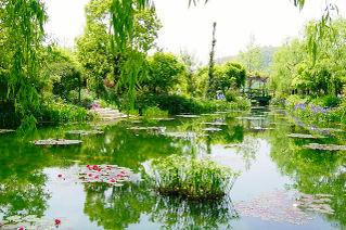 Water_garden_5