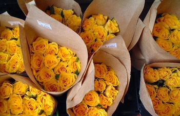 yellow_rose_01