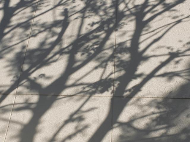 2011tree-shadow